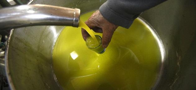 فلاح: بيع تنكة زيت الزيتون بـ110 آلاف ل.س لا يحقق الحد الأدنى للمعيشة