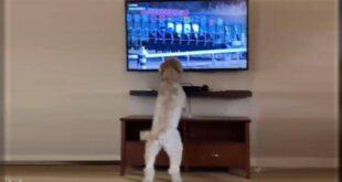 أكثر من مليوني مشاهدة لهذا الكلب.. والسبب يثير العجب