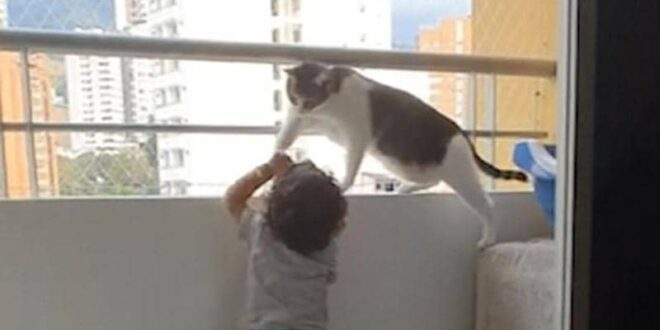فيديو مؤثر.. قطة تنقذ طفلا من الموت
