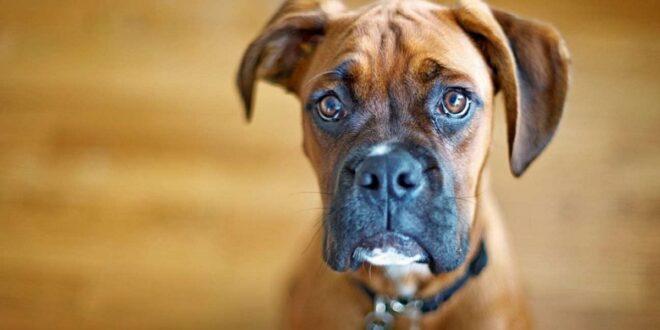 رجل يصرف مئات الدولارات لعلاج كلبه.. ثم يكتشف الصدمة