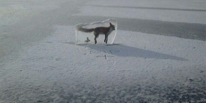 50 تحت الصفر.. الحيوانات تتجمد بشكل لا يصدق في كازاخستان.. شاهد!