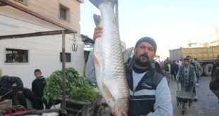 سمكة ب 100 ألف ليرة سورية في دير الزور