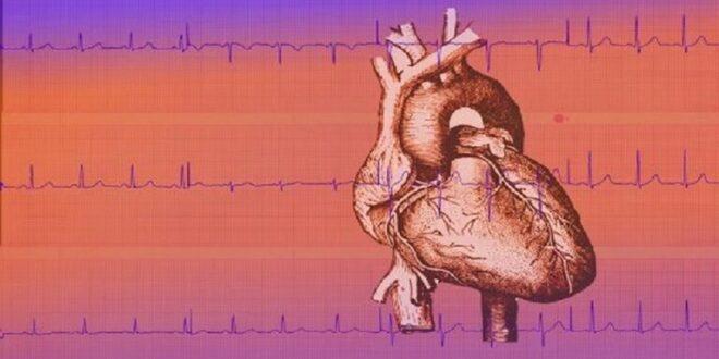 طريقة بسيطة للتحقق من صحة القلب