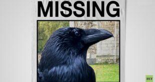 """قلق في بريطانيا بعد اختفاء غامض لـ""""ملكة غربان"""" برج لندن .. شاهد"""