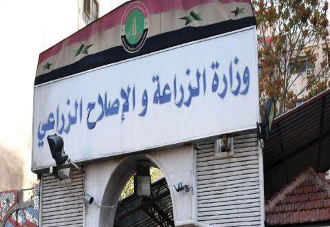 وزارة الزراعة السورية: انخفاض أعداد الثروة الحيوانية 60 بالمئة