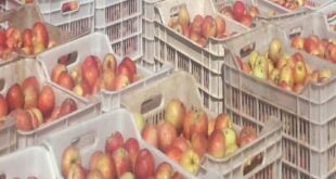 شاحنات التفاح السوري لا تزال متوقفة على الحدود المصرية.. وتعرض بعضها للتلف