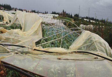 عضو لجنة تجار الخضار: أسعار الخضر المنتجة في البيوت البلاستيكية ارتفعت حتى 50 بالمئة