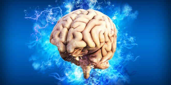 10 أطعمة تعزز من صحة الدماغ
