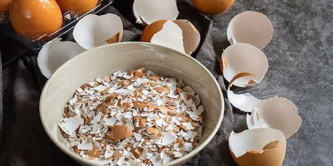 كنز صحي طبيعي.. 5 فوائد مذهلة تدفعك لتناول مسحوق قشر البيض