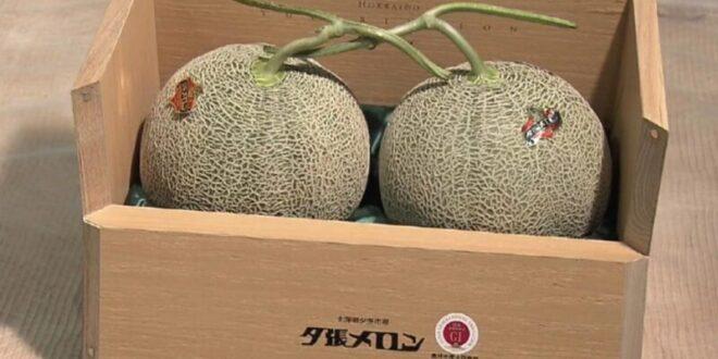 أغلى أنواع الفاكهة في العالم.. سعر الحبة الواحدة بثمن سيارة