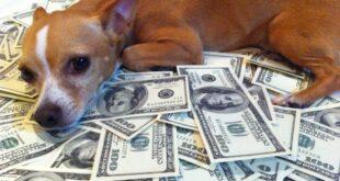 """رجل أعمال يورث كلبته """"لولو"""" 5 ملايين دولار (صورة)"""