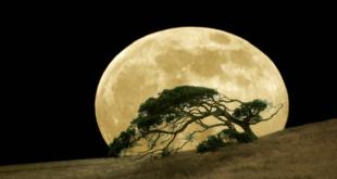 """أين توجد """"أشجار القمر"""" على الأرض؟"""