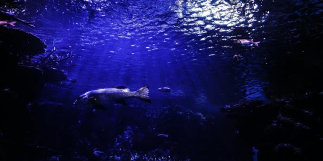 سمكة غريبة تشبه التمساح بأسنان حادة تحيّر الخبراء!