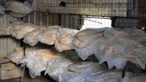 السويداء.. مغتربون يتكفلون بتوزيع الخبز مجانا لأهالي قريتهم
