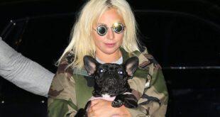 ليدي غاغا تعرض نصف مليون دولار مكافأة للعثور على كلبيها المسروقين