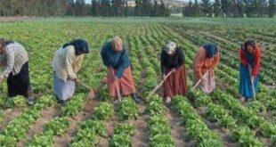 70 بالمئة من العمال في سورية من النساء