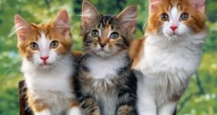 حقائق صادمة عن القطط.. وقدرات تتفوق فيها على البشر