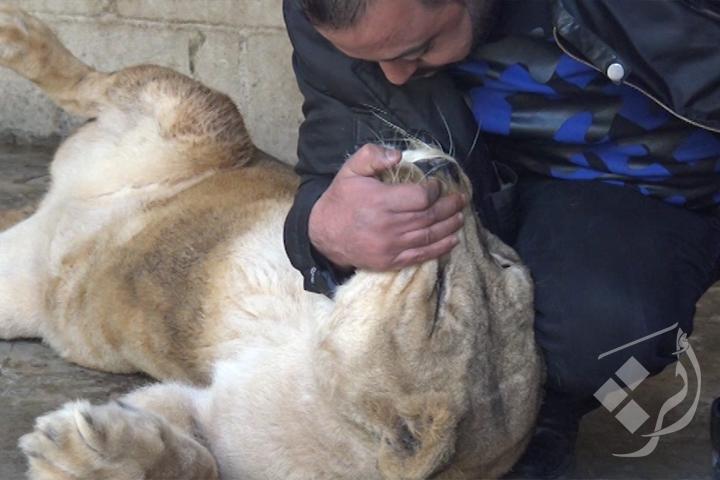 تربية الحيوانات المفترسة والمهددة بالانقراض
