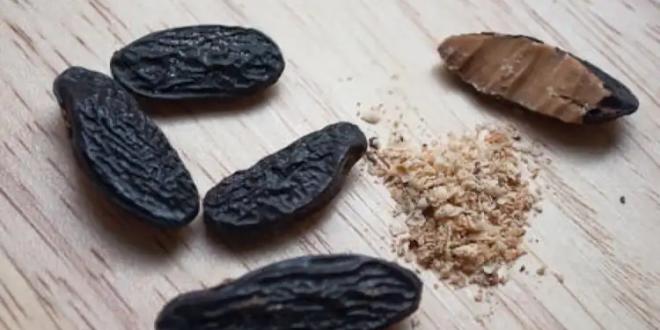 سرّ التونكا.. رغم سميّتها تعتبر من أغلى أنواع العطور وأطيبهم رائحة