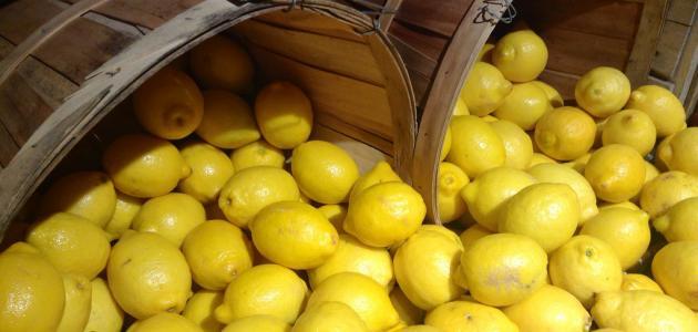 طرق تخزين الليمون لاستخدامه في غير موسمه