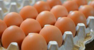 عضو في اتحاد غرف الزراعة يتوقع ارتفاعاً جديداً بأسعار البيض