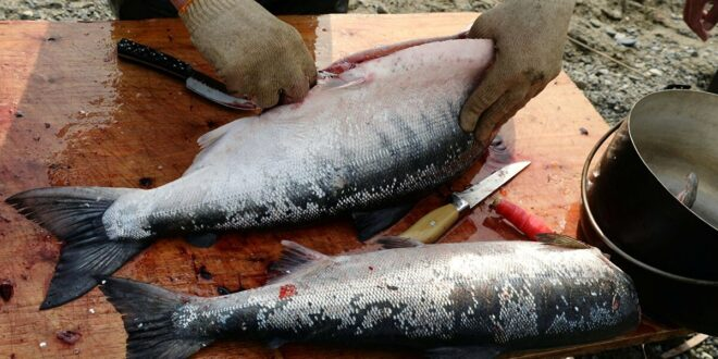 5 علامات لمعرفة ما إذا كانت الأسماك طازجة أم لا