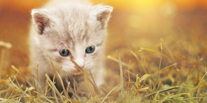 مقطع يفطر القلوب... قطة تحمل صغيرها المريض إلى المستشفى وتطلب المساعدة