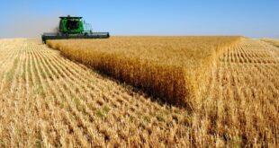 """تطبيقاً لـ """"قيصر""""... عمليات سرقة القمح السوري مستمرة في الشرق بعد سرقة النفط"""