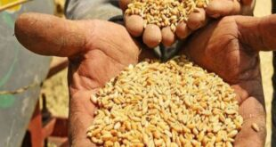 التوريدات الروسية من القمح الى سوريا بدأت بالوصول