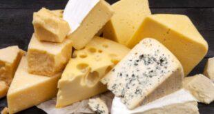 أخطر أنواع الجبن في العالم