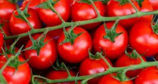 تسعة أطعمة تمنع نمو الخلايا السرطانية في الجسم!