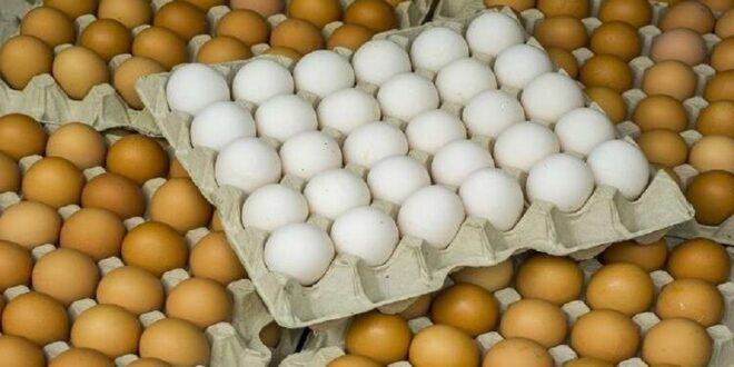 كيف نختار بيض الطعام