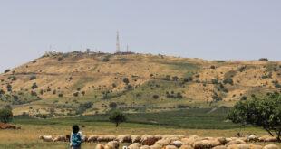 مقتل راع وسرقة وإبادة 400 رأس غنم بهجوم في ريف حماة الشرقي