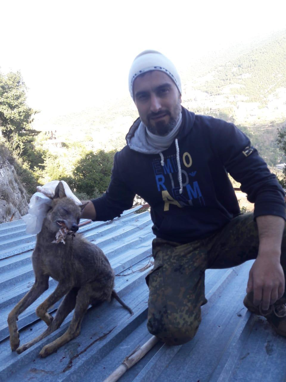 مفترسة ودموية.. حيوانات مُرعبة تظهر في بلدة لبنانية