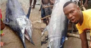شاب يأكل فرصة عمره.. اصطاد سمكة بقيمة 2.6 مليون دولار والتهمها مع أصدقائه!