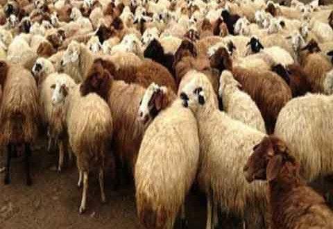 جمعية لحامين دمشق: أصغر خروف سعره 500