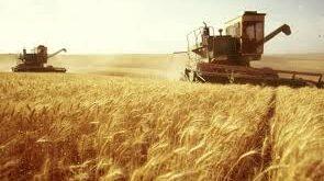 أين اختفت 800 ألف طن من القمح السوري؟
