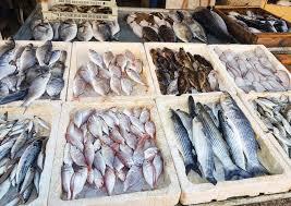 """ارتفاع خيالي بأسعار الأسماك في اللاذقية.. ومصدر مسؤول يبرر: السبب """"قرار محروقات"""""""