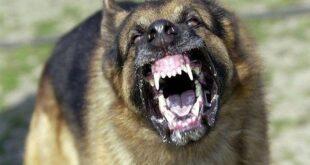 لترويع الأهالي.. تركيا تطلق كلاب شرسة على قرى سورية حدودية