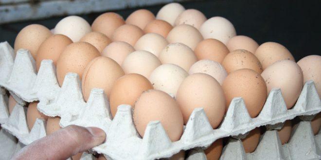 8 آلاف ليرة لطبق البيض وتجار يحتكرون المادة
