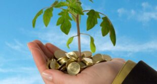 مؤسسات التمويل الصغير تمنح تسهيلات إئتمانية