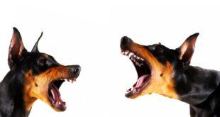 السر في نباح الكلاب عند رؤية بعض الأشخاص دون غيرهم