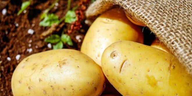 طبيب روسي: احذروا هذا الخطأ عند طهي البطاطا
