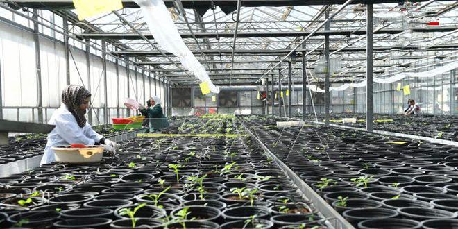 أصناف جديدة من بذور البطاطا والقمح والفطر