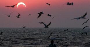 ظاهرة خطيرة تؤدي إلى اختناق الأسماك بشواطئ الكويت