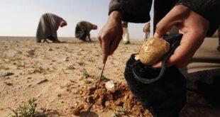 الكمأة تحصد المزيد من الأرواح في سوريا