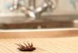 حيلة سحرية للتخلص من الصراصير في المنزل