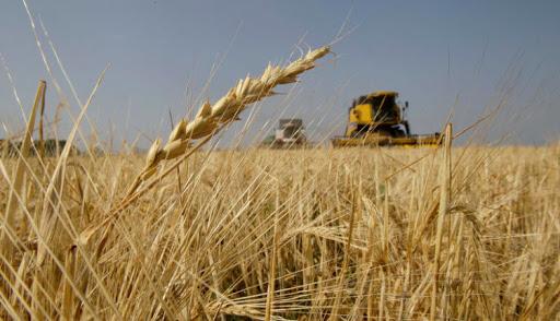 ثلاث قوى تتنافس على شراء موسم القمح في الحسكة