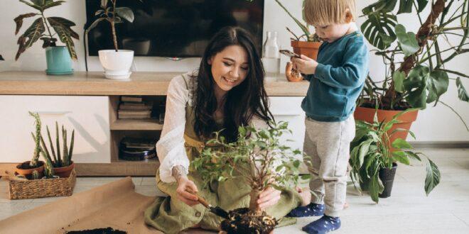 نبتة سامة في المنزل قد تودي بحياة طفل في دقيقة