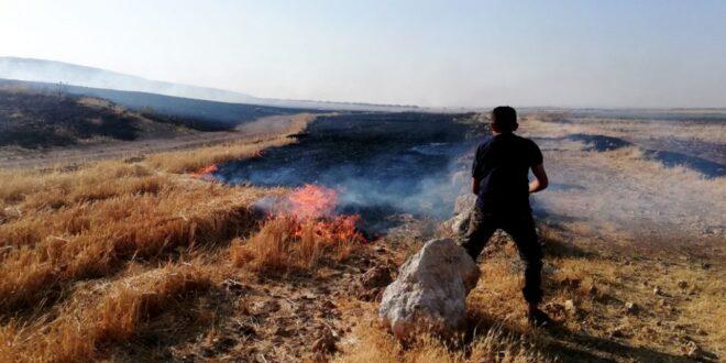 تركيا تحرق عشرات الهكتارات من القمح والشعير في ريف حلب